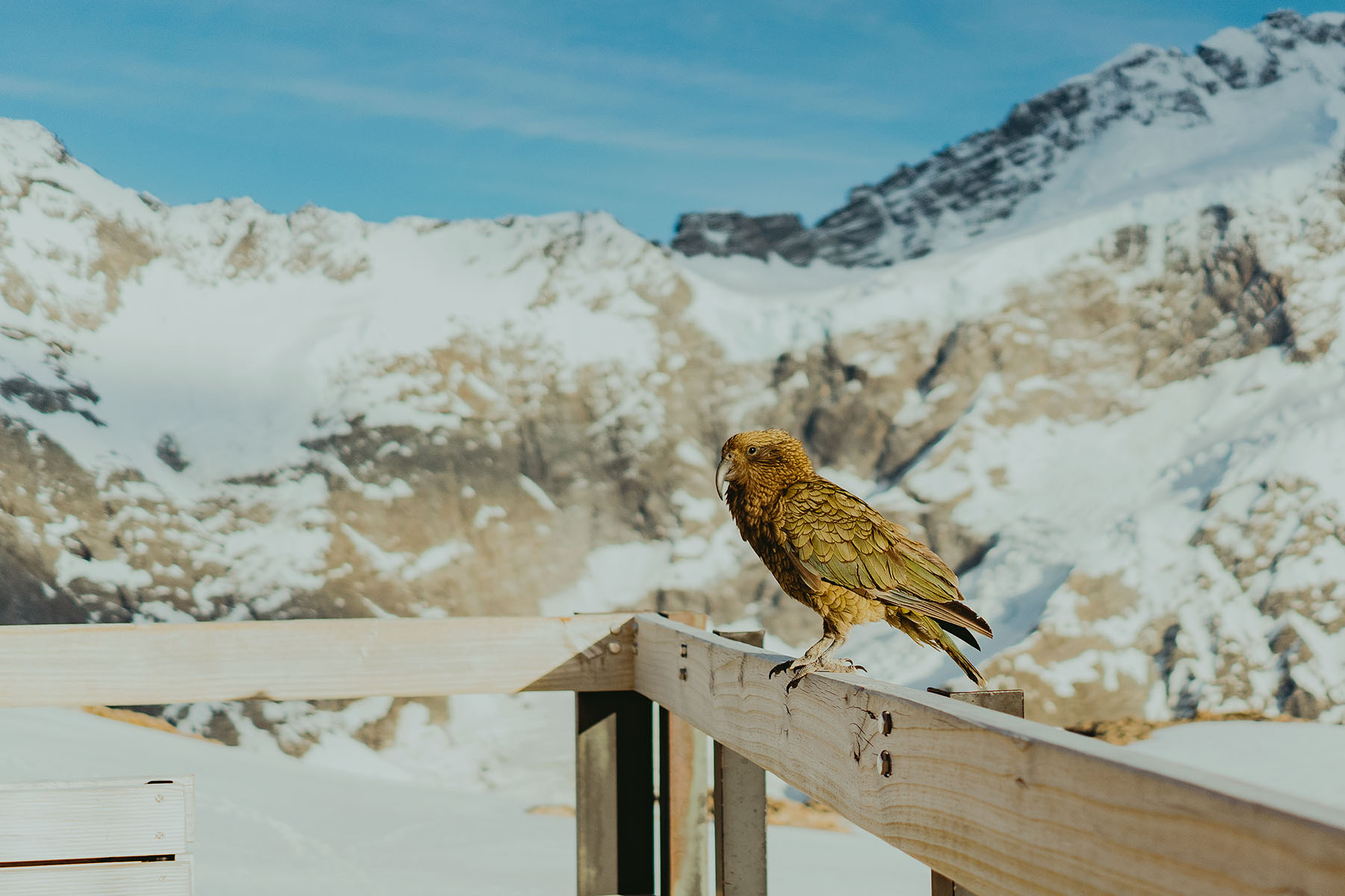 ragnhild Utne Aoraki/mount cook national park new zealand mueller hut kea bird